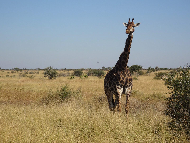 drakensbergen, swaziland \u0026 kruger park kampeer kampeerreis tongasabiMooiste Plekken Krugerpark.htm #18