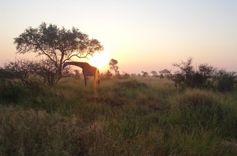 Panoramaroute & Wildlife kampeer