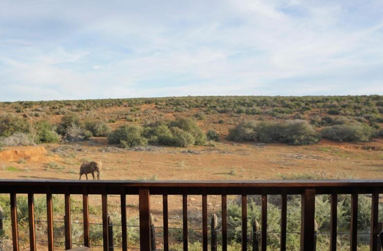 Addo Elephant Restcamp – Safaritent