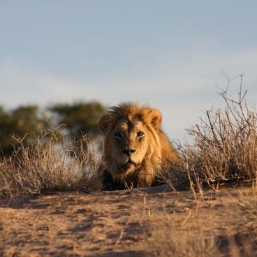 Kgalagadi Zuid-Afrika