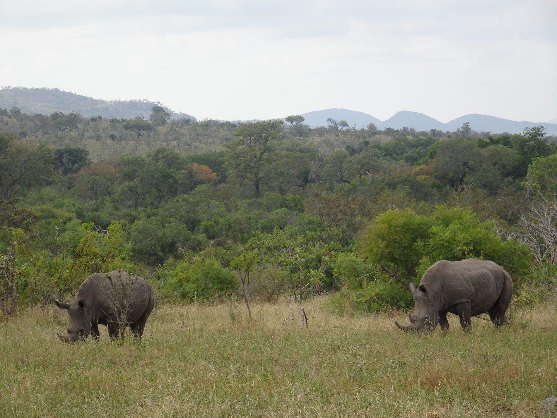 lower sabie chalet kruger national park self drive zuid afrikalower sabie chalet kruger national park self drive zuid afrika tongasabi
