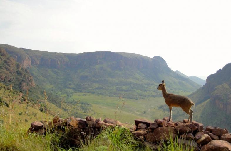 Landschap, Zulukust & Wildlife kampeer