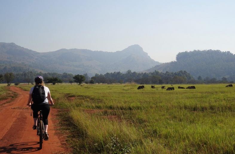 Johannesburg – Durban: Wildlife & Kust