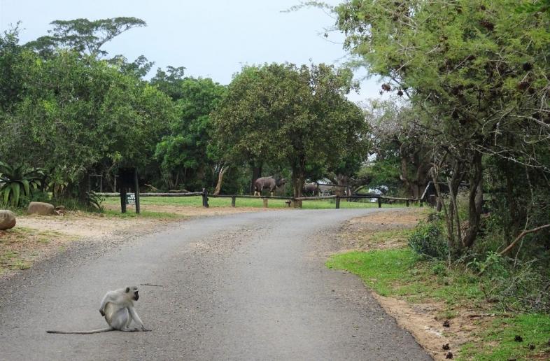 iMfolozi Mpila Camp – Safaritent